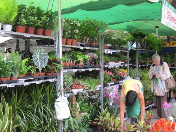 Flora Olomouc nezklamala