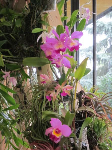 flora orchideje
