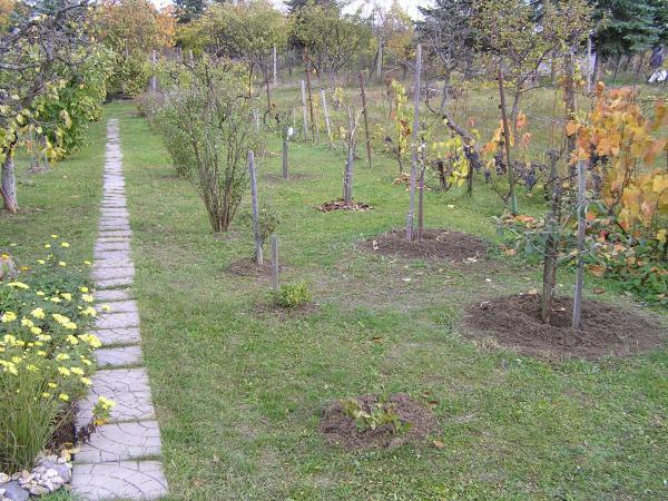 moja uprataná záhrada