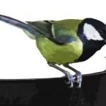 Už ste nakŕmili svoje záhradné vtáčiky?
