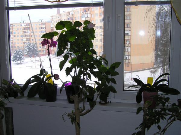 zbyly jen větvičky s květy