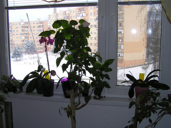 ostali len halúzky s kvetmi
