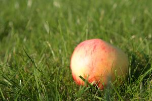 zabudnuté jabĺčko