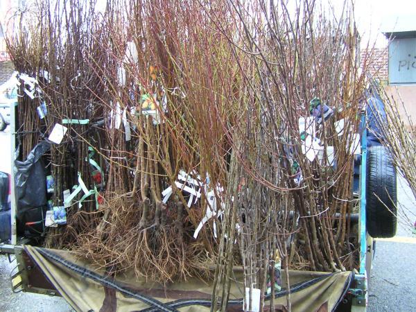 prodej stromků na tržnici