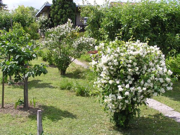 moje zahrada v červnu