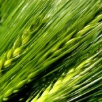 Ako si zlepšiť imunitu prírodnými prostriedkami