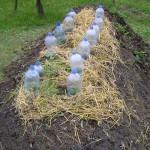 V malej záhradke vyvýšený záhon, na farme nemecká kopa