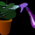 Nezabudnite sa postarať o zelené rastliny vo svojom byte