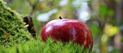 jablka-ma-rad-kazdy