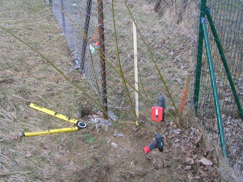 sázení plotu z vrbových prutů