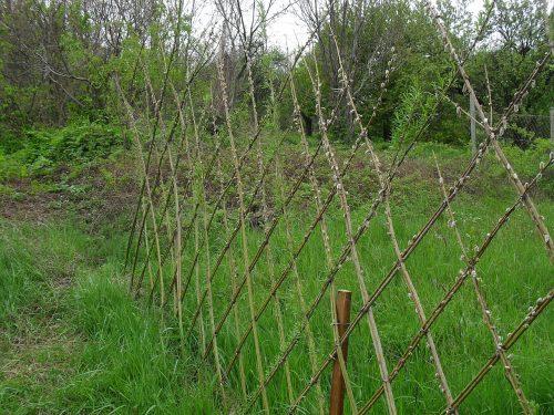 vrbový plot