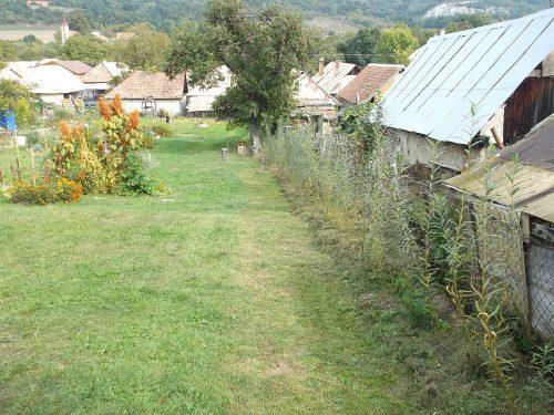 vŕby pri plote