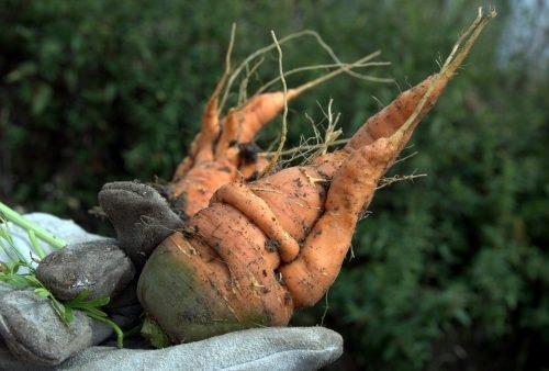 Je křivá zelenina zdravější?