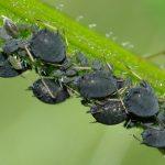 Prečo postreky proti hmyzu napomáhajú množeniu škodcov