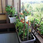 Paradajky nie len zo záhrady