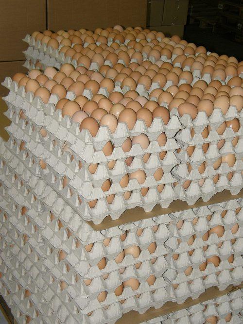 paleta vajec