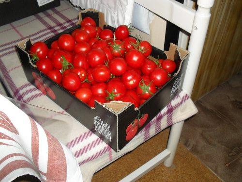 plná bedna rajčat