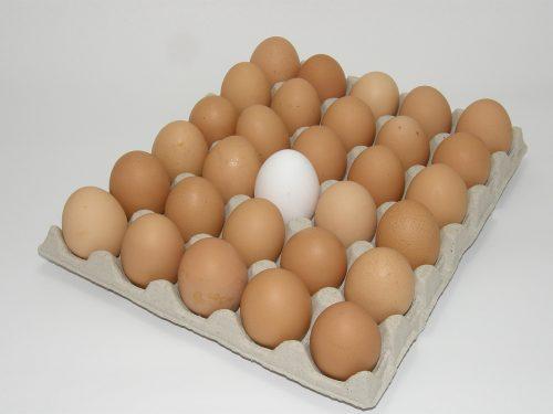 přeložka vajec