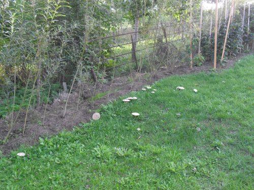 houby v zahradě