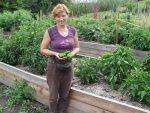 papriky z vyvýšeného záhona