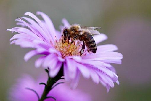 Ale iba včely a covid budeme vyzdvihovať
