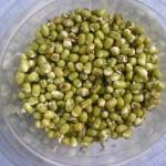 Moje experimenty s nakličovaním semienok