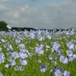 Ľanové semeno ako zdroj 3-omega a všeličoho iného
