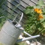 Závlaha záhrady – záruka krásy a bohatej úrody