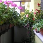 Záhradkár má novinku