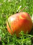 jabĺčko v tráve