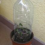 Prenosný skleník z PET fľaše