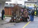 predaj stromkov