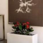 Samozavlažovacie kvetináče