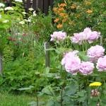 Moja júnová záhrada v obrázkoch