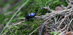 chrobák v pôde