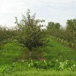 Jesenný predaj stromčekov začne už onedlho