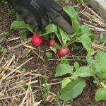 Nová záhrada priniesla prvú úrodu