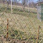 Vŕbový plot v našej záhrade