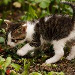 Ako ochrániť rastliny pred mačkami