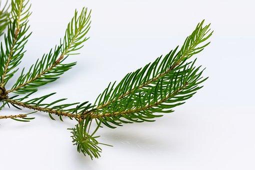 Vyhodené vianočné stromčeky pre záhradu